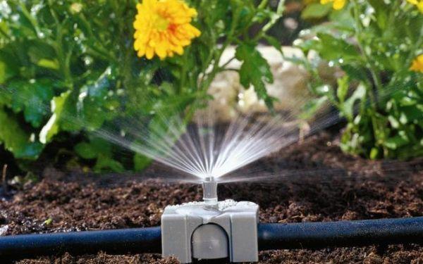 Ekonomiczne podlewanie ogrodu. Jak podlewać oszczędzając wodę
