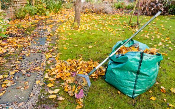 Sprzątamy ogród jesienią. Usuwanie opadłych liści
